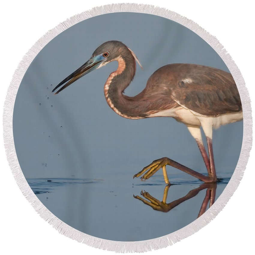 Animal Round Beach Towel featuring the photograph Tricolored Heron Stepping by Jerry Fornarotto