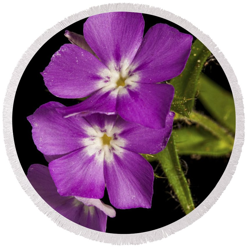 Purple Round Beach Towel featuring the photograph Trio In Purple by Christopher Holmes