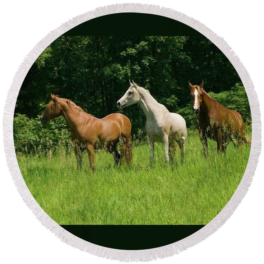 Horse Round Beach Towel featuring the photograph Trio In Spring by Michael Barry