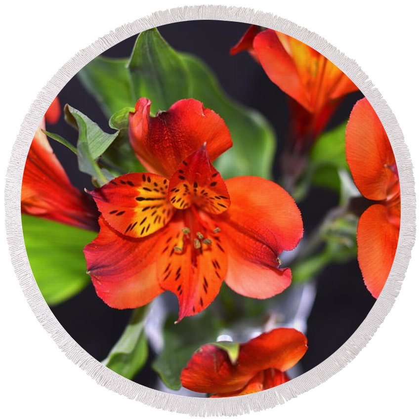 Macro Round Beach Towel featuring the photograph Trio Of Alstroemeria Inca Flowers-4 by Jennifer Wick