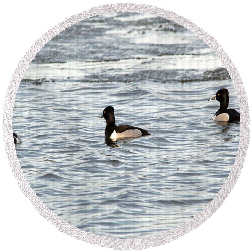 Duck Round Beach Towel featuring the photograph Trio Of Ducks by Linda Kerkau