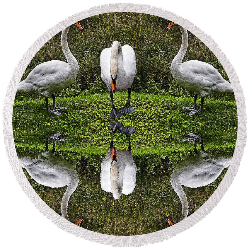 Swan Round Beach Towel featuring the photograph Triplets In Reflection by Chris Lord