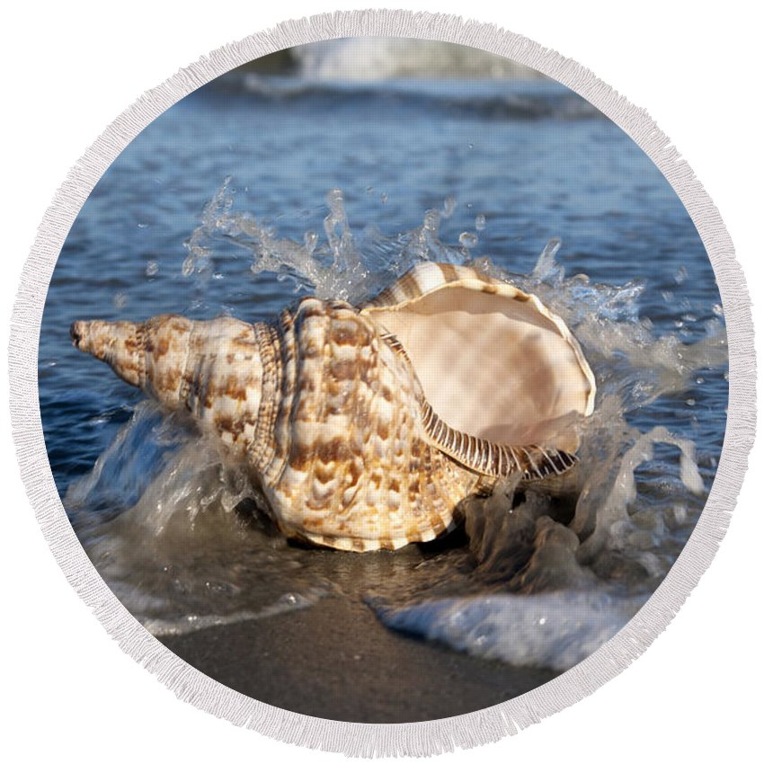 Shell Round Beach Towel featuring the photograph Triton Shell by Anthony Totah