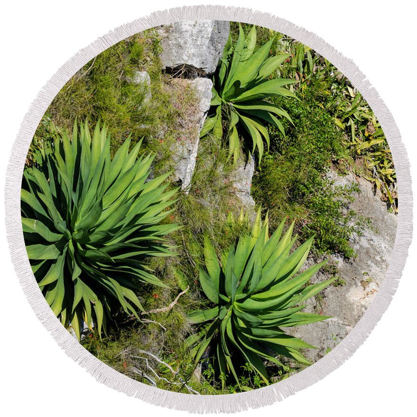 Tropical Round Beach Towel featuring the photograph Agave Plants On Rocky Slope by Les Palenik