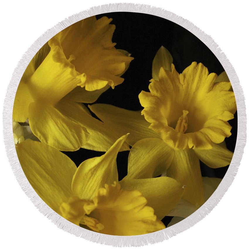 Macro Round Beach Towel featuring the photograph Trumpet Daffodils by Nancy Griswold