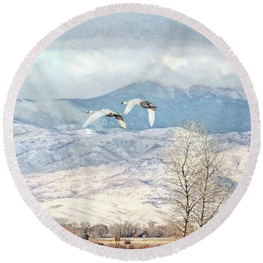 Trumpeter Swan Round Beach Towel featuring the photograph Trumpeter Swans Winter Flight by Jennie Marie Schell