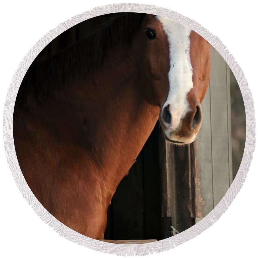 Thoroughbred Round Beach Towel featuring the photograph T's Window by Angela Rath