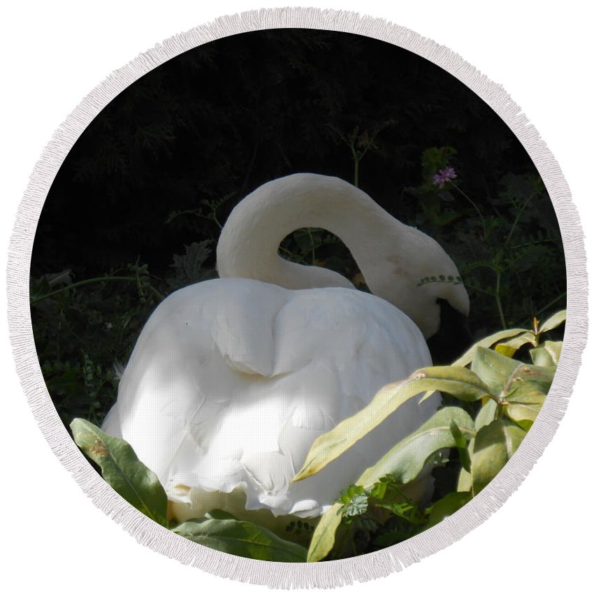 Trumpeter Swan Round Beach Towel featuring the photograph Tucked In The Shadow by LKB Art and Photography