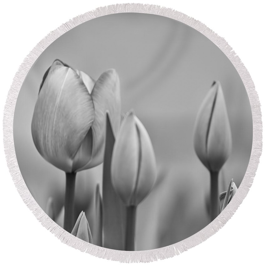 Flowers Round Beach Towel featuring the photograph Tulip 37 by Ingrid Smith-Johnsen