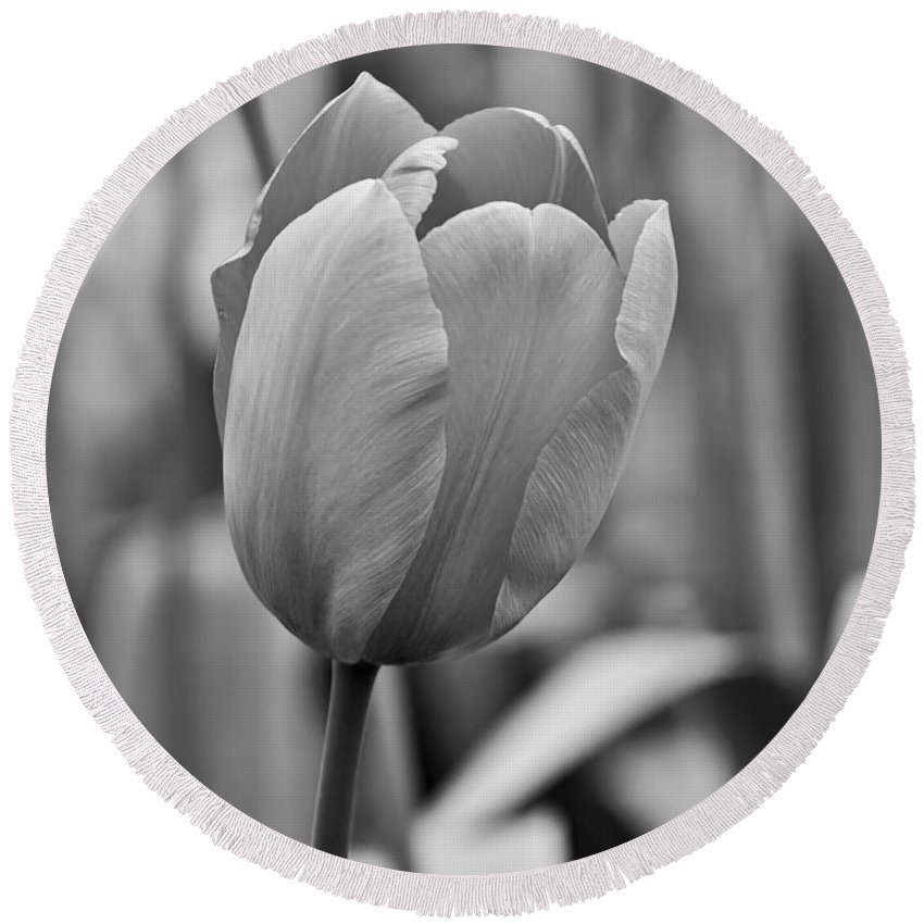 Flowers Round Beach Towel featuring the photograph Tulip 42 by Ingrid Smith-Johnsen