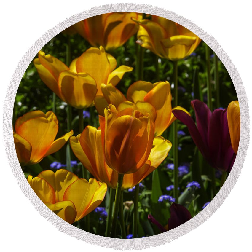Yellow Round Beach Towel featuring the photograph Tulip Garden by Garry Gay