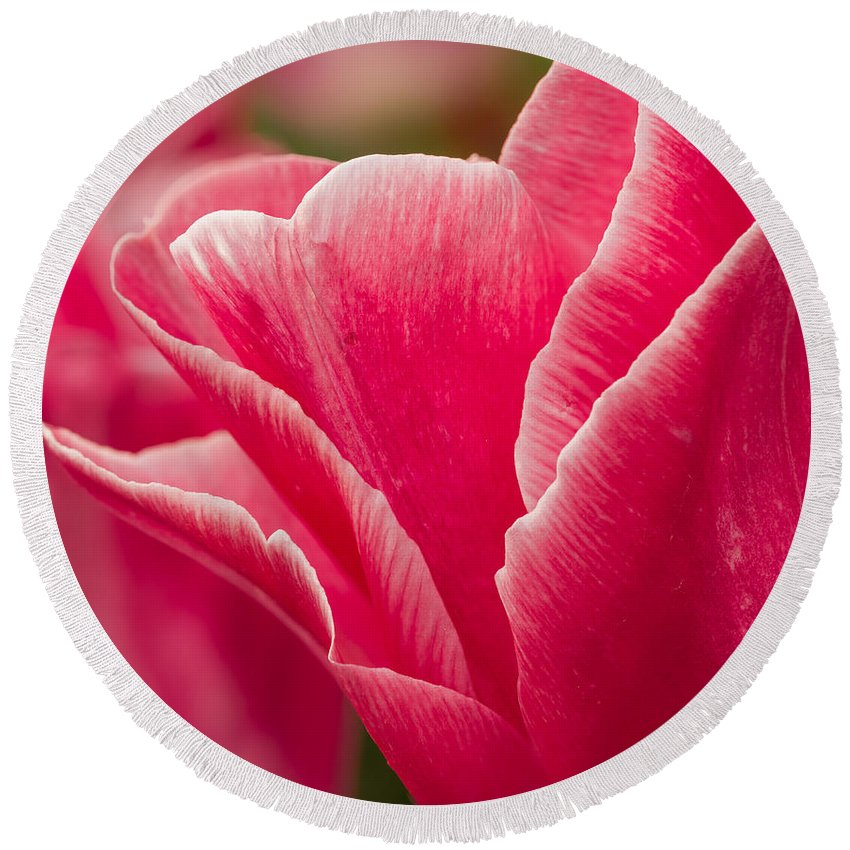 Tulip Round Beach Towel featuring the photograph Tulip Layers by Mary Jo Allen