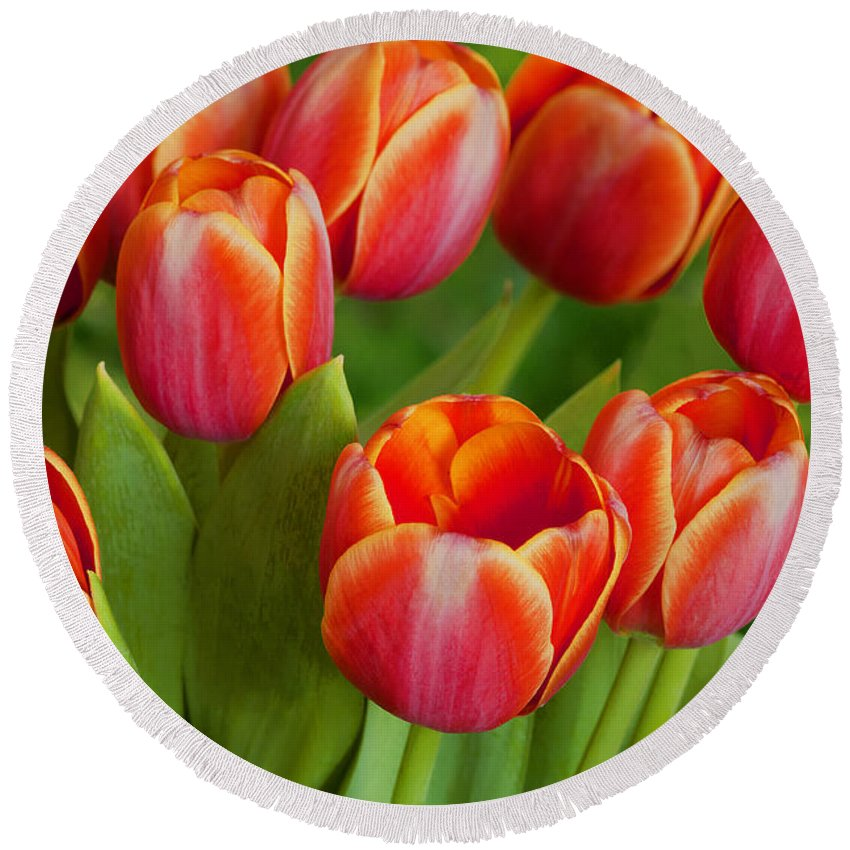 Tulips Round Beach Towel featuring the photograph Tulip Patch by Regina Geoghan