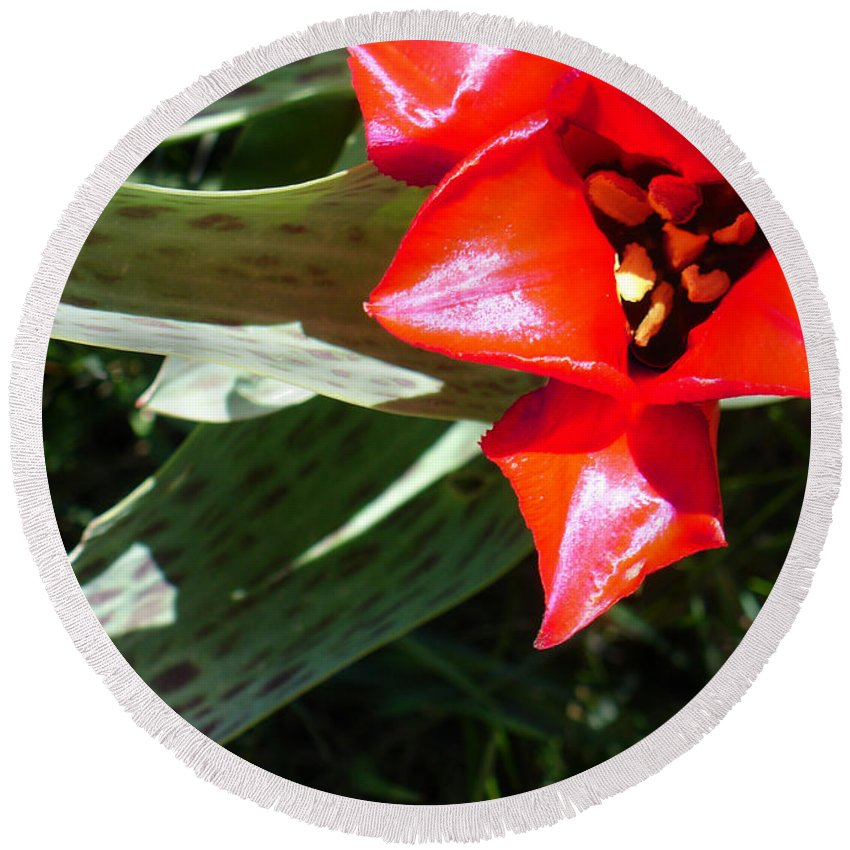 Tulip Round Beach Towel featuring the photograph Tulip by Steve Karol
