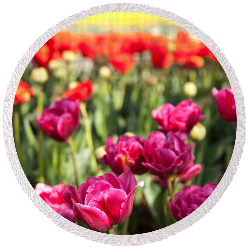 Tulips Round Beach Towel featuring the photograph Tulips 2 by Christopher D Elliott