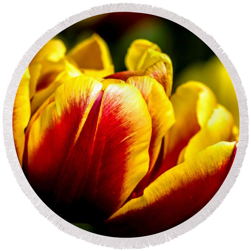 Agriculture Round Beach Towel featuring the photograph Tulips 7 by Jijo George