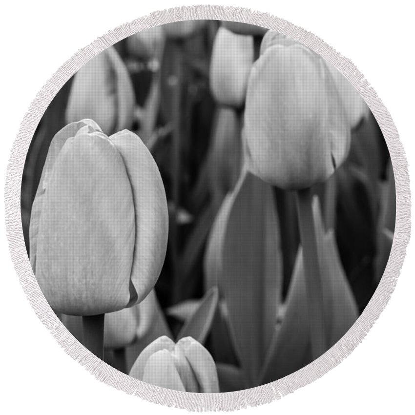 Black And White B & W Bandw B&w Monochrome Monochromatic Grey Gray Scale Dutch Pink Flower Tulip Tulips Flowers Gardening Netherlands Keukenhof Europe European Gardens Garden Travel Purple Destination Springtime Colorful Colourful Cultivation Growing Colors Colours Bloom Blooming Natural Growth Planted Plant Leaves Blossom Seasonal Season Stems Stem Detail Beautiful Delicate Flora Field Spring Flowerbed Agriculture Tones Detail Closeup Close Round Beach Towel featuring the photograph Tulips 4 by Marcin Rogozinski