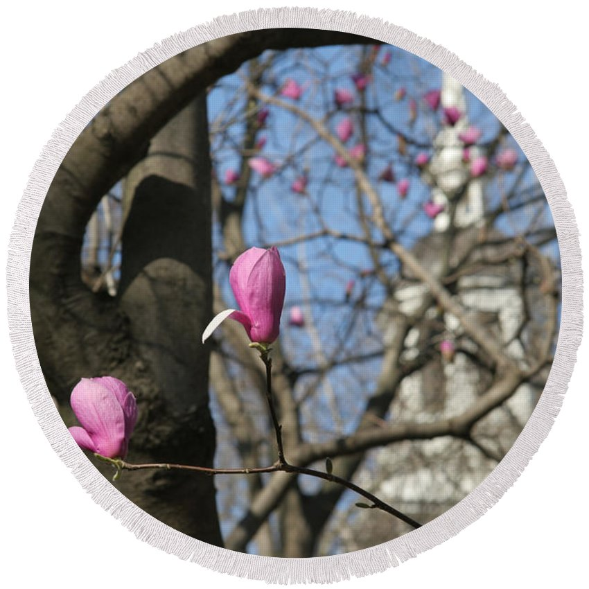 Tulips Round Beach Towel featuring the photograph Tulips On Trees by Clay Cofer