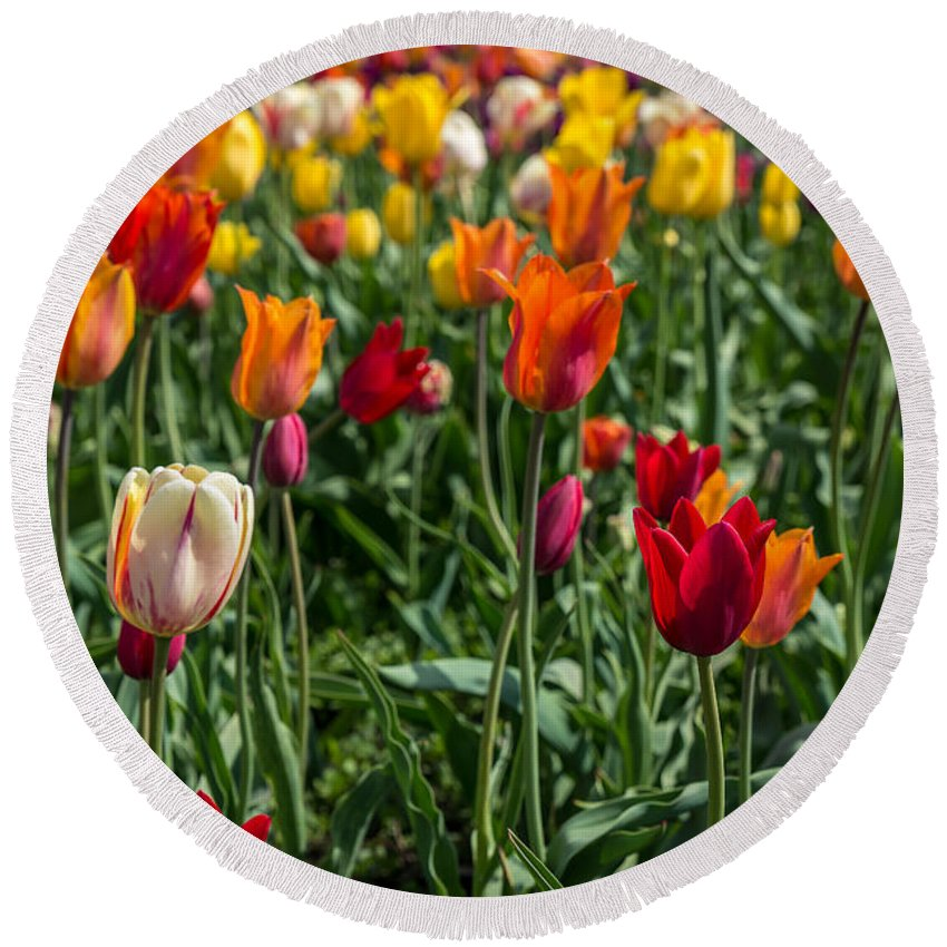 Tulips Round Beach Towel featuring the photograph Tulips by Patrick Shupert
