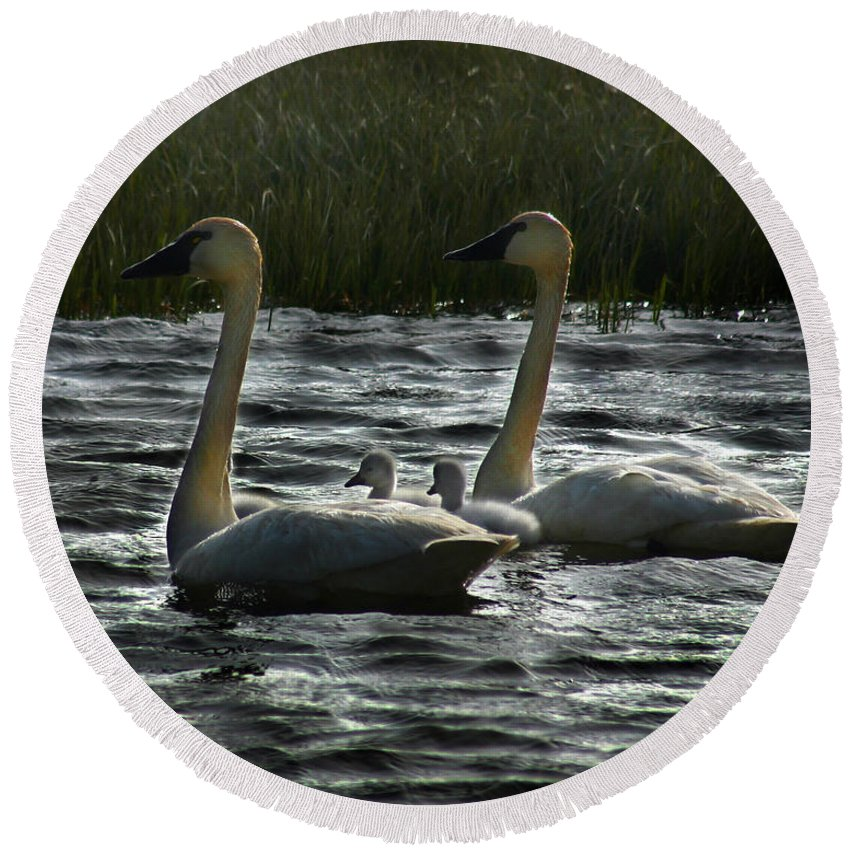 Tundra Swans Round Beach Towel featuring the photograph Tundra Swans by Anthony Jones