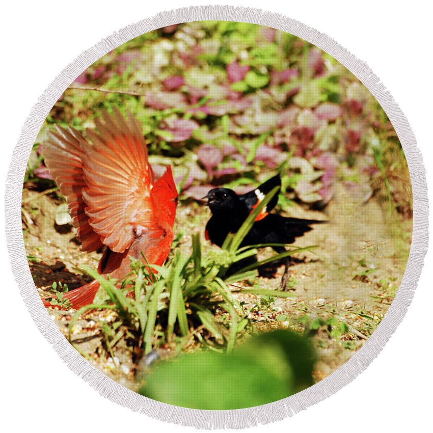 Cardinal Round Beach Towel featuring the photograph Turf War by Lori Tambakis