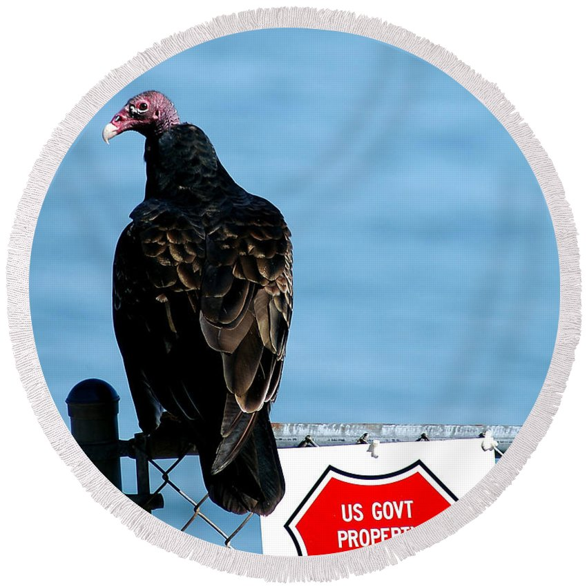 Clay Round Beach Towel featuring the photograph Turkey Buzzard by Clayton Bruster