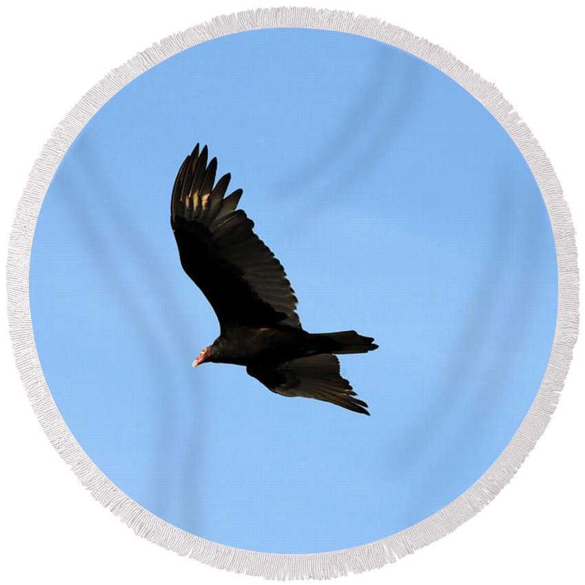 Turkey Vulture Round Beach Towel featuring the photograph Turkey Vulture by David Lee Thompson