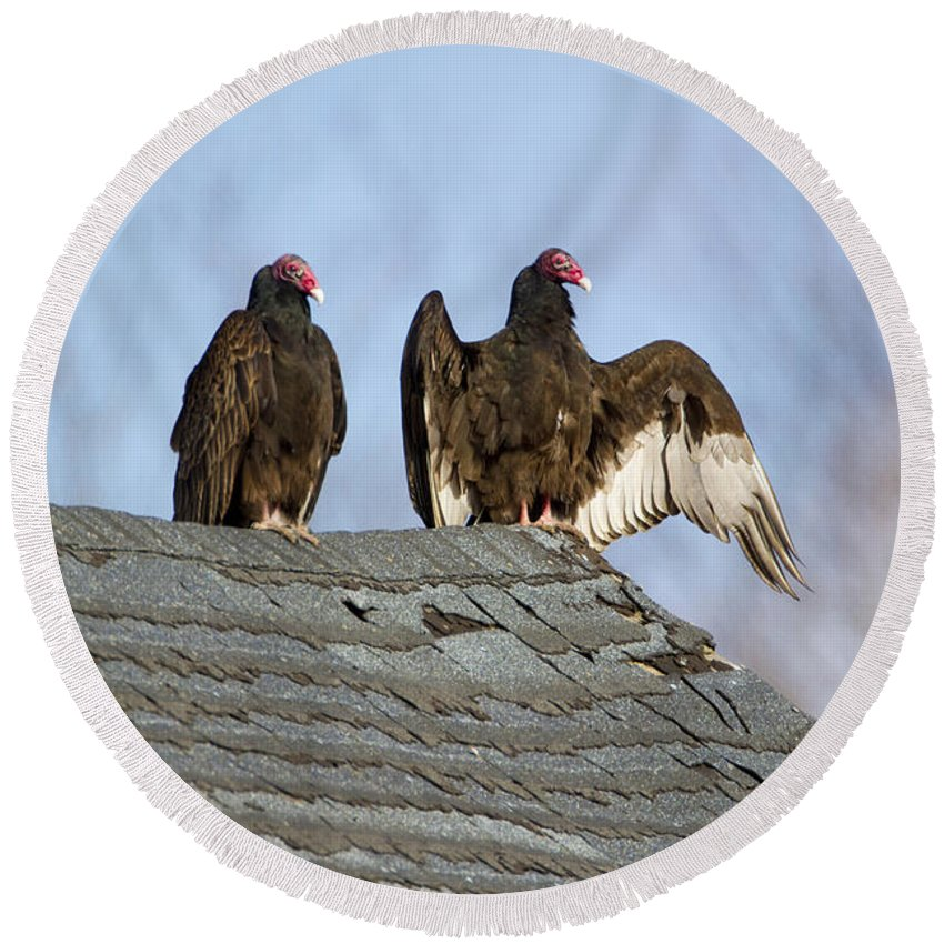 Turkey Vulture Round Beach Towel featuring the photograph Turkey Vultures On Roof by Marie Read