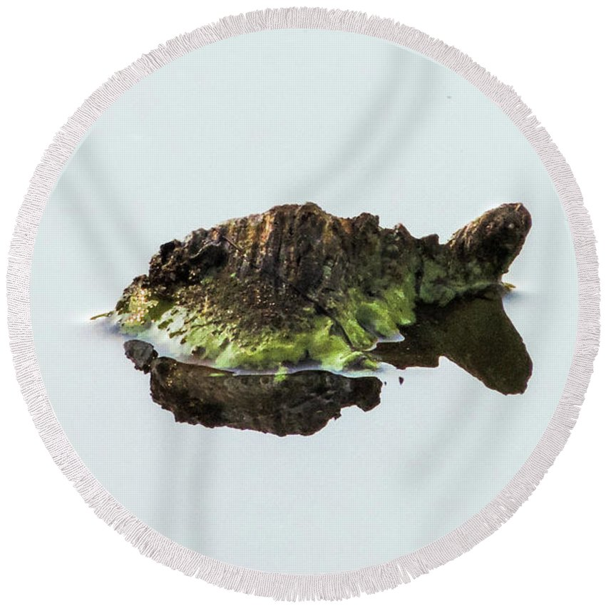 Turtle Round Beach Towel featuring the photograph Turtle or Mountain by Randy J Heath
