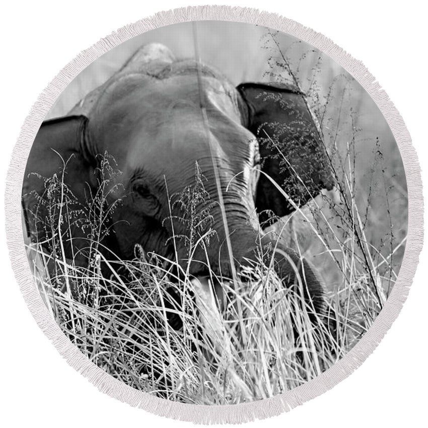 Black And White Round Beach Towel featuring the photograph Tusker In The Grass by Pravine Chester