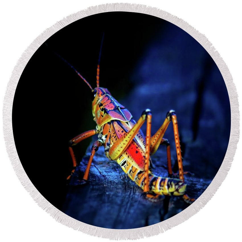 Grasshopper Round Beach Towel featuring the photograph Twilight Grasshopper by Mark Andrew Thomas