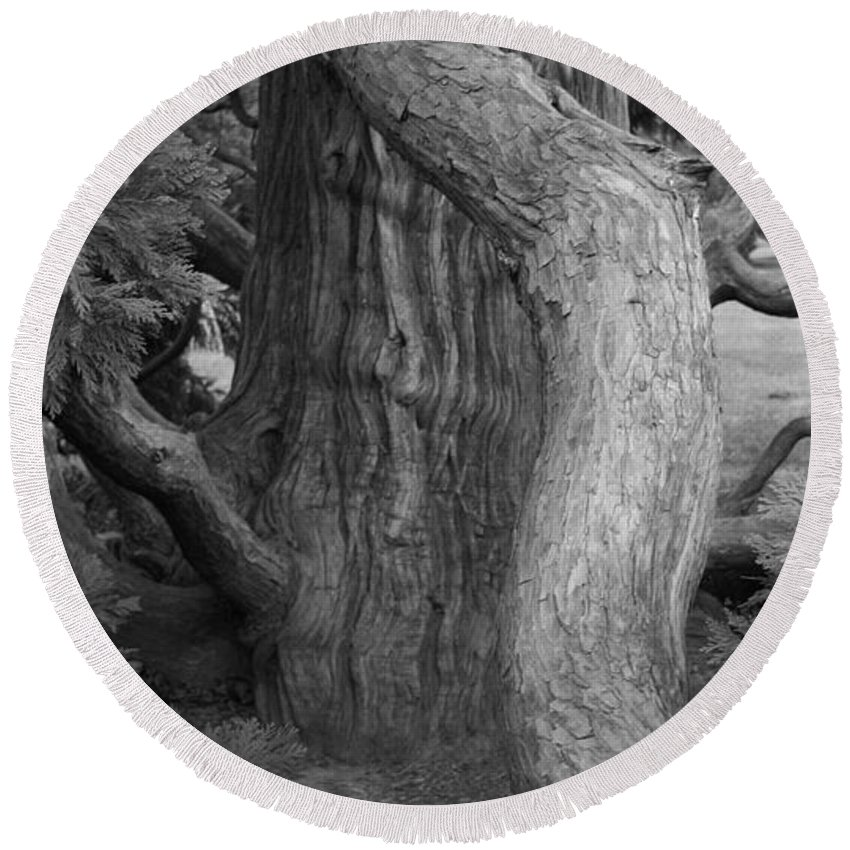 Tree Round Beach Towel featuring the photograph Twisted Old Tree by Tina Meador