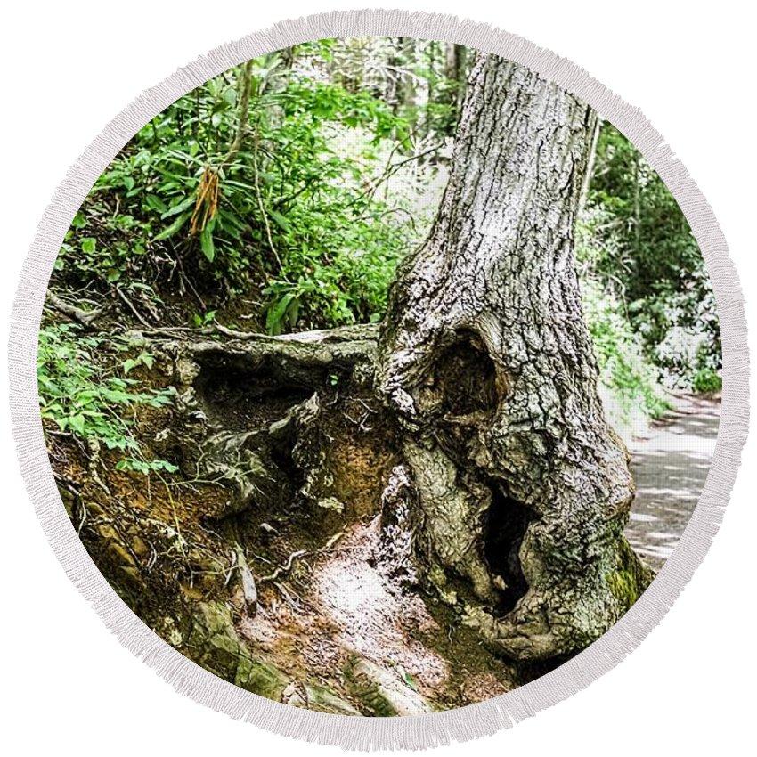 Twisted Tree Smoky Mountains Round Beach Towel featuring the photograph Twisted Tree Smoky Mountains by Cynthia Woods