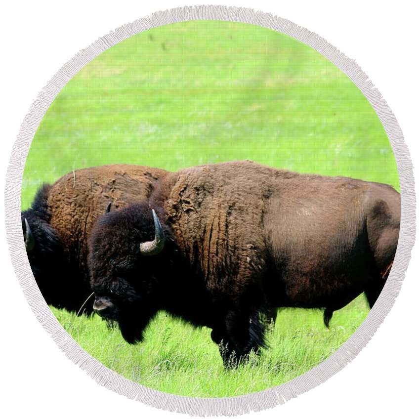 Bison Round Beach Towel featuring the photograph Two Amigos by Christiane Schulze Art And Photography