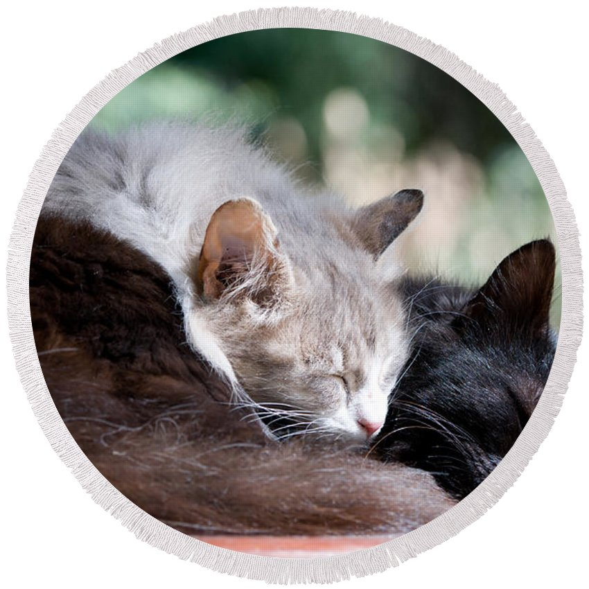 Cat Round Beach Towel featuring the photograph Two Cats Sleeping by Michalakis Ppalis