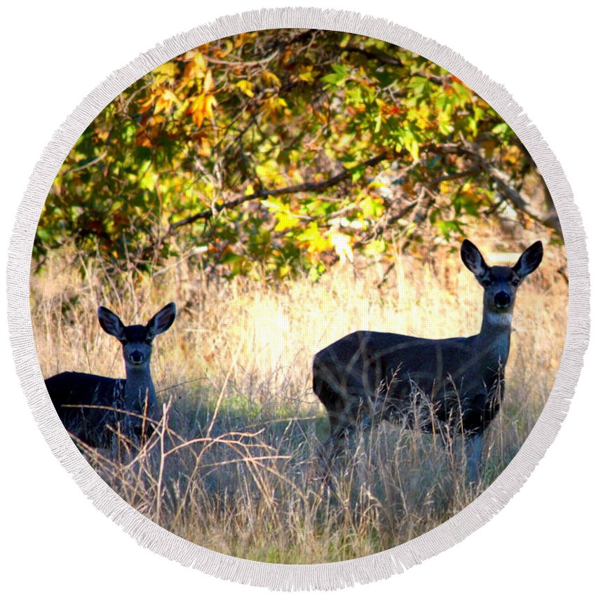 Animal Round Beach Towel featuring the photograph Two Deer In Autumn Meadow by Carol Groenen