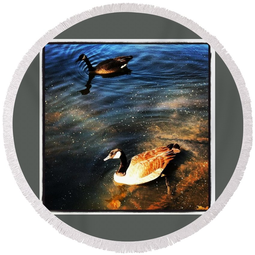 Ducks Round Beach Towel featuring the photograph Two Ducks by Artie Rawls