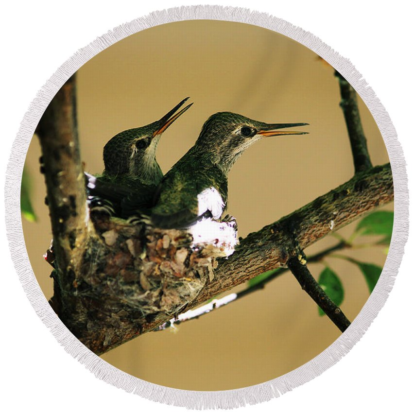 Hummingbirds Round Beach Towel featuring the photograph Two Hummingbird Babies In A Nest 5 by Xueling Zou