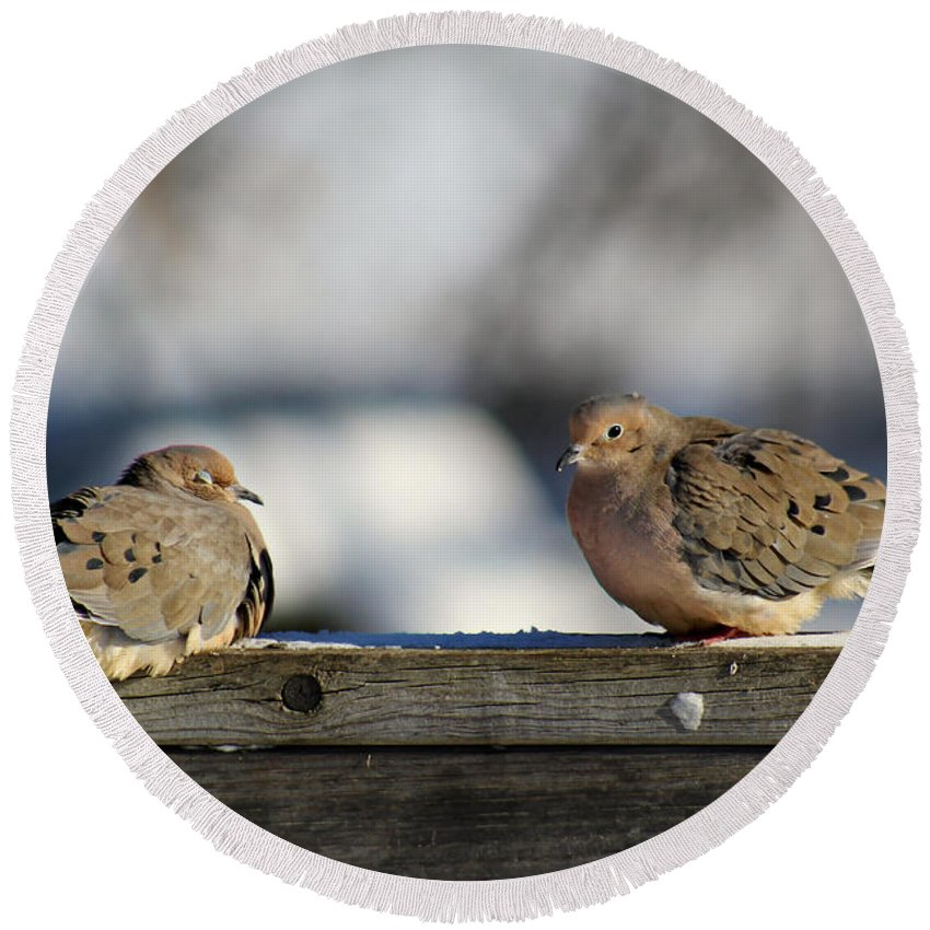 Birds Round Beach Towel featuring the photograph Two Mourning Doves by Denise Irving