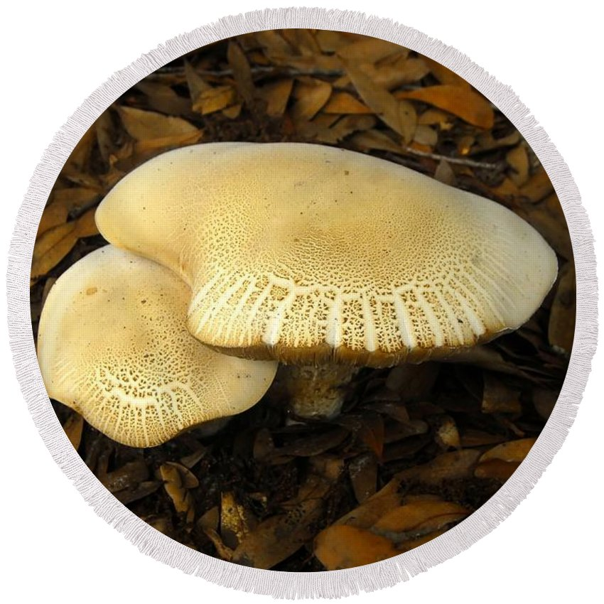 Mushrooms Round Beach Towel featuring the photograph Two Mushrooms by David Lee Thompson