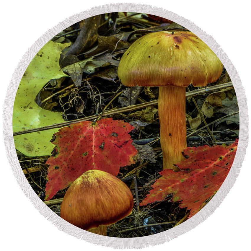 Mushroom Round Beach Towel featuring the photograph Two Mushrooms by Paul Freidlund