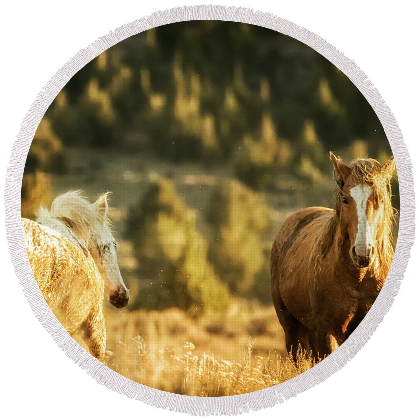 Wild Horses Round Beach Towel featuring the photograph Two Mustangs Post Playtime At The Waterhole by Belinda Greb