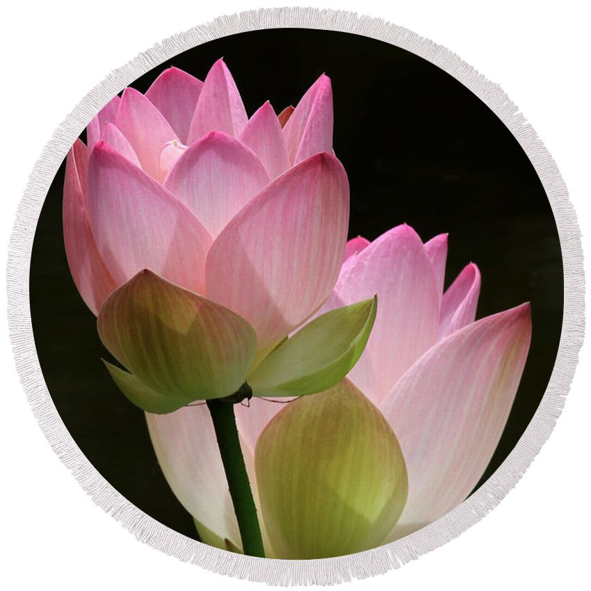 Lotus Round Beach Towel featuring the photograph Two Pink Lotus by Sabrina L Ryan