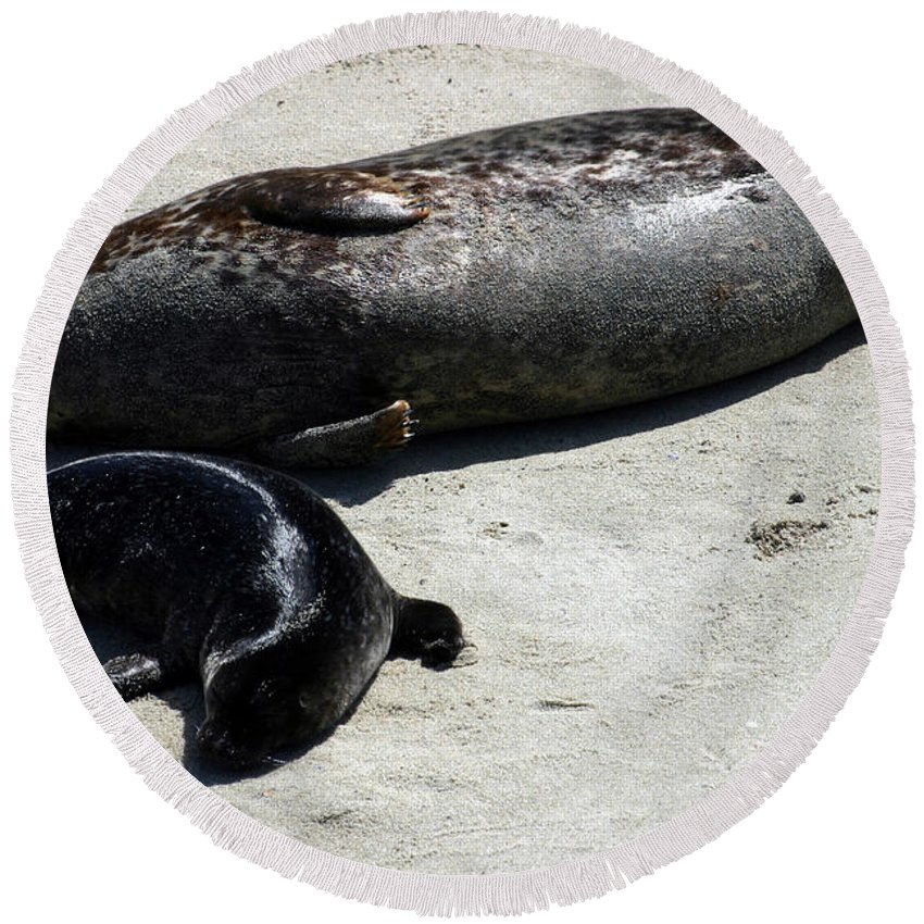 Seal Round Beach Towel featuring the photograph Two Seals by Anthony Jones