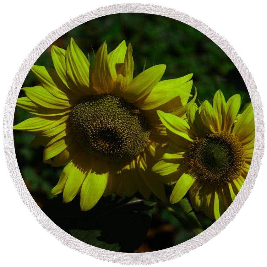 Yellow Flowers Round Beach Towel featuring the photograph Two Yellow Beauties by Jeff Swan