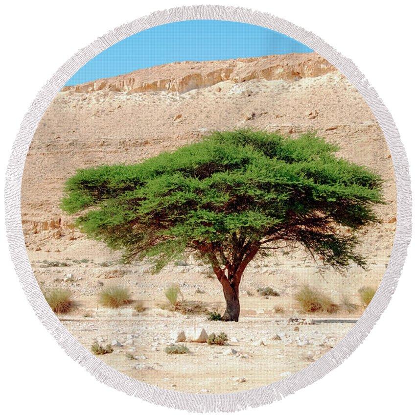 Wilderness Round Beach Towel featuring the photograph Umbrella Thorn Acacia, Negev Israel by Ilan Rosen