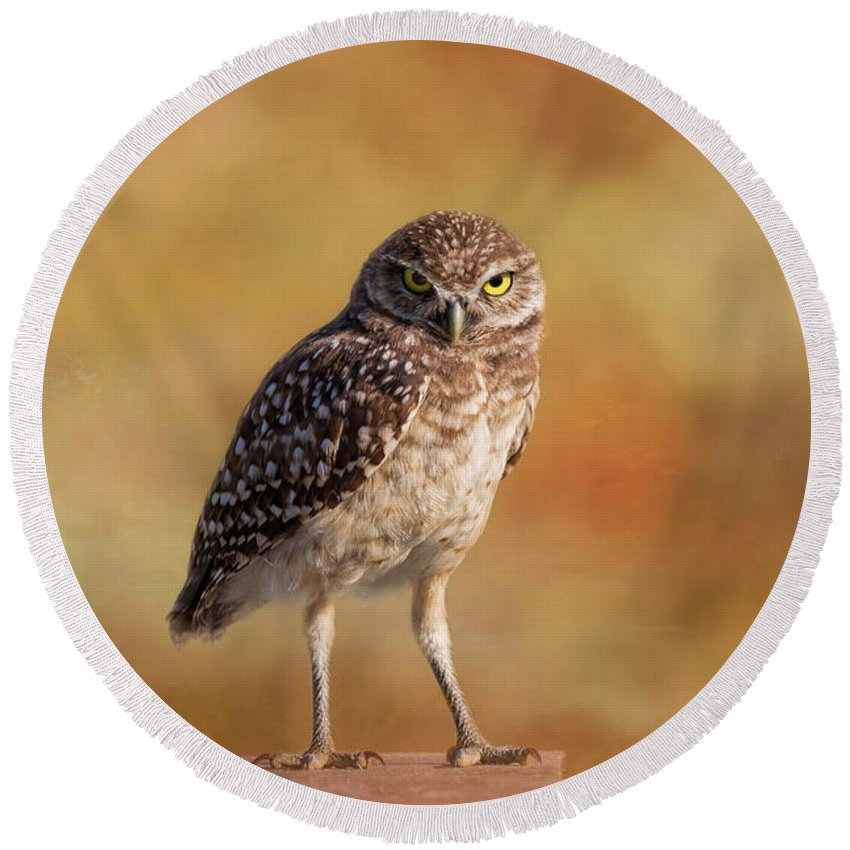 Owl Round Beach Towel featuring the photograph Under A Watchful Eye by Kim Hojnacki
