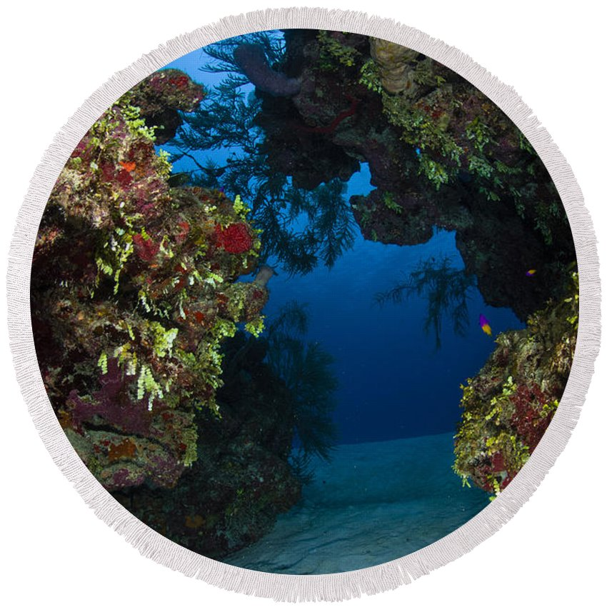 Sea Life Round Beach Towel featuring the photograph Underwater Crevice Through A Coral by Todd Winner