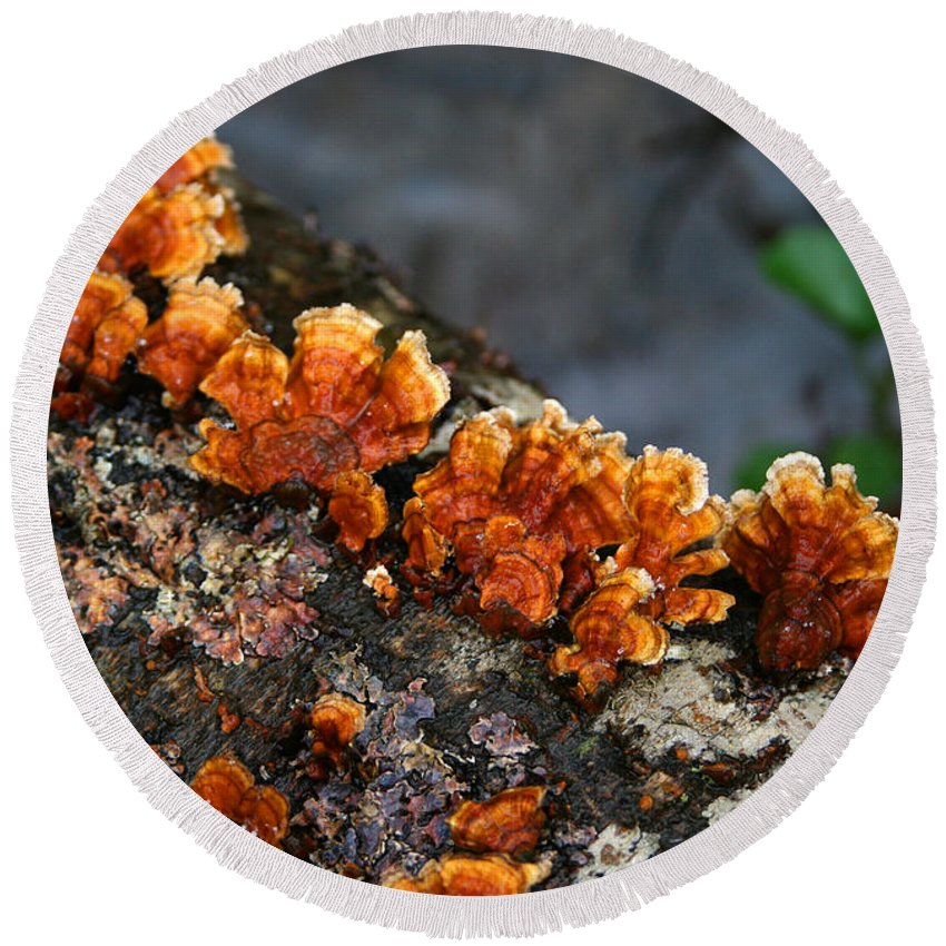 Bright Orange Nature Wet Forest Fungus Tree Wood Closeup Macro Round Beach Towel featuring the photograph Unexpected Brightness by Andrei Shliakhau