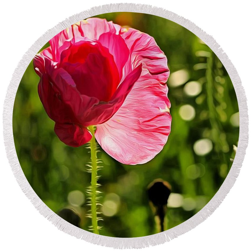 Poppy Round Beach Towel featuring the photograph Unfolding by Robert Brown